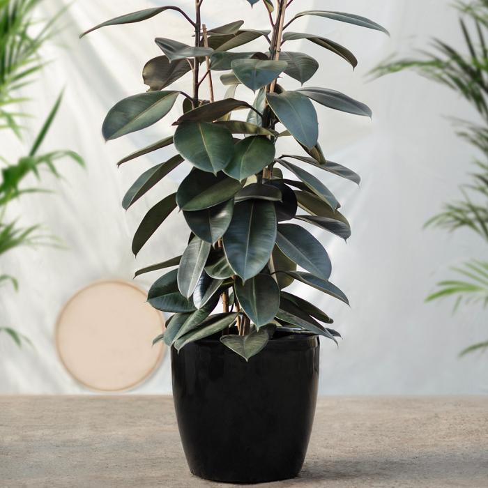 Plantas de interior12 - PLANTAS DE INTERIOR - Conheça 7 CORES para Complementar
