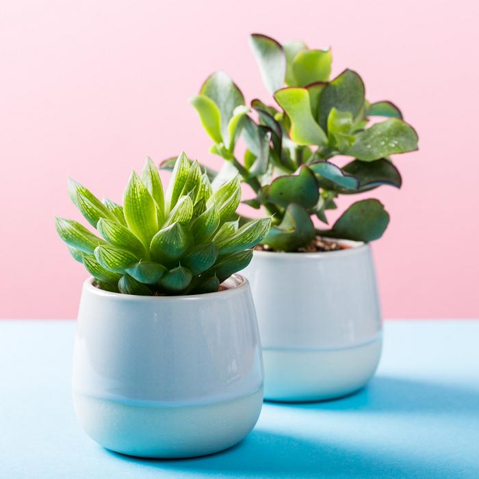 Plantas de interior2 - PLANTAS DE INTERIOR - Conheça 7 CORES para Complementar