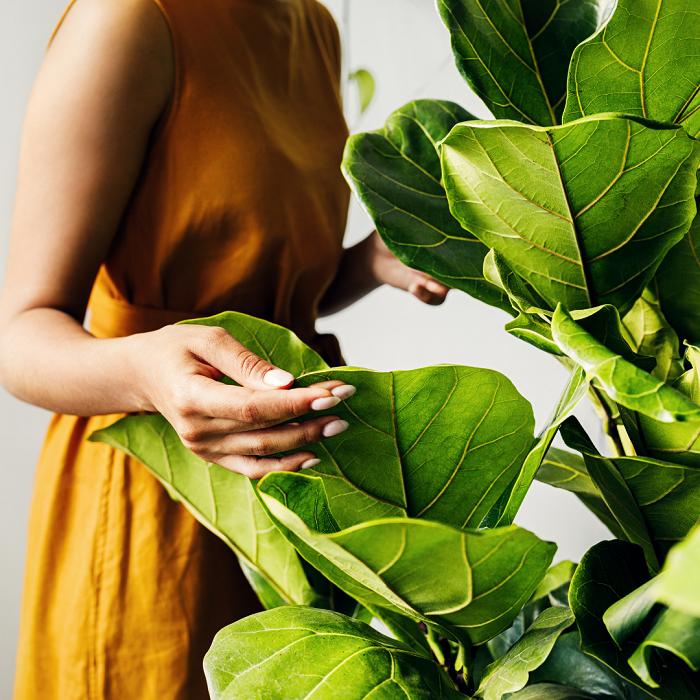 Plantas de interior4 - PLANTAS DE INTERIOR - Conheça 7 CORES para Complementar