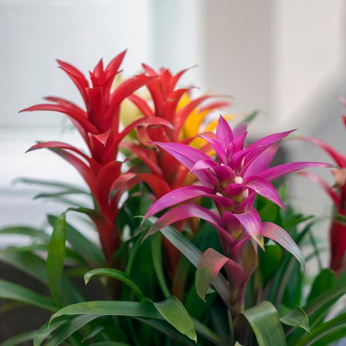 Plantas de interior5 - PLANTAS DE INTERIOR - Conheça 7 CORES para Complementar