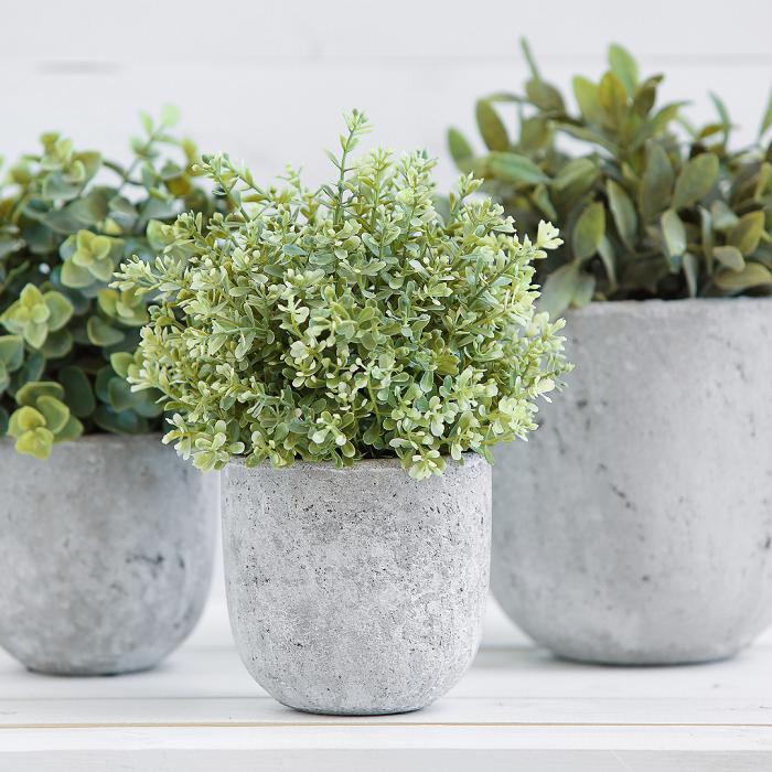 Plantas de interior7 - PLANTAS DE INTERIOR - Conheça 7 CORES para Complementar