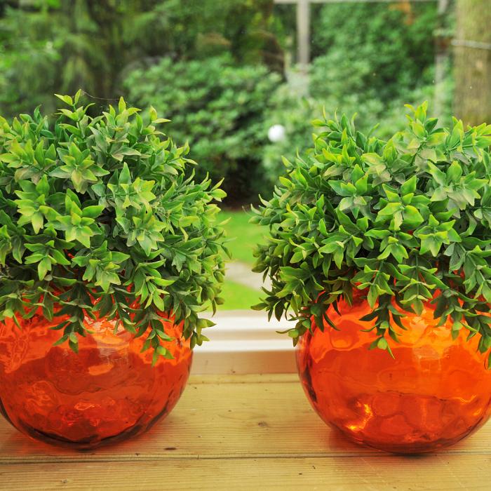 Plantas de interior8 - PLANTAS DE INTERIOR - Conheça 7 CORES para Complementar