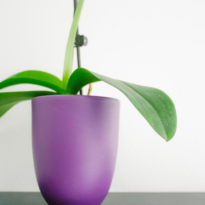 Plantas de interior9 - PLANTAS DE INTERIOR - Conheça 7 CORES para Complementar