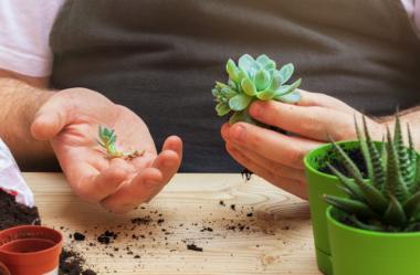 Conheça as 4 Suculentas Mais Difíceis de Cultivar