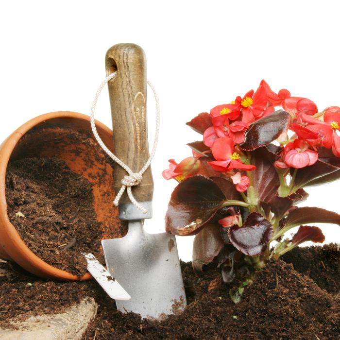 begonias 1 - Begônias -10 Passos para Cuidar com Excelência