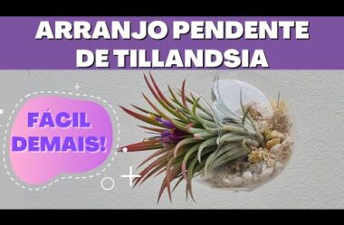 MUITO FÁCIL E RÁPIDO! FAÇA UM LINDO ARRANJO PENDENTE DE TILLANDSIA