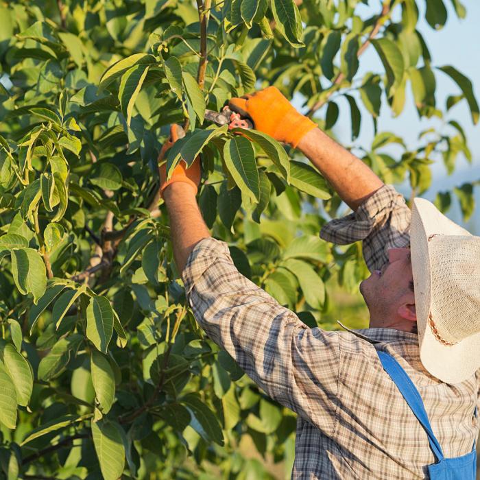 poda 2 - 8 Motivos para Fazer PODAS DE PLANTAS
