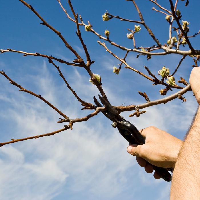 poda 3 - 8 Motivos para Fazer PODAS DE PLANTAS
