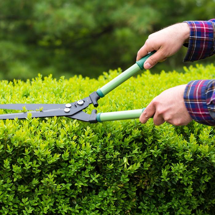 poda 6 - 8 Motivos para Fazer PODAS DE PLANTAS