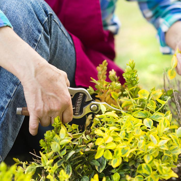poda 7 - 8 Motivos para Fazer PODAS DE PLANTAS