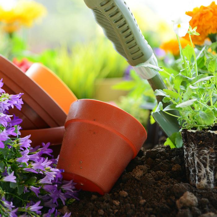 7 Sinais Para Trocar A Planta De Vaso 3 - 7 Sinais Para Trocar A Planta De Vaso