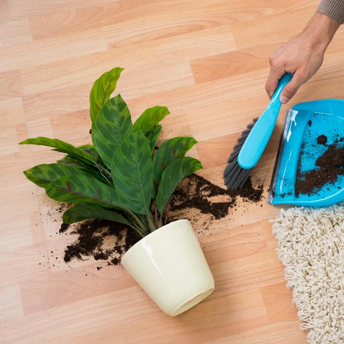 7 Sinais Para Trocar A Planta De Vaso 5 - 7 Sinais Para Trocar A Planta De Vaso