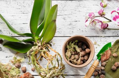 7 Sinais Para Trocar A Planta De Vaso