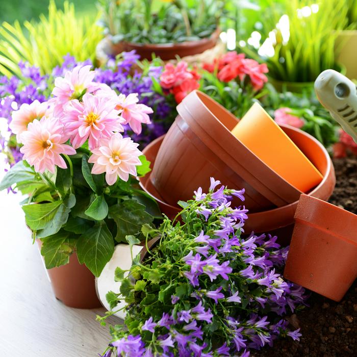 7 Sinais Para Trocar A Planta De Vaso - 7 Sinais Para Trocar A Planta De Vaso