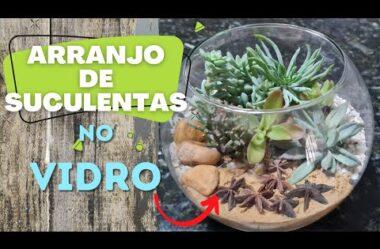 COMO FAZER ARRANJO DE SUCULENTAS NO VIDRO | PARA INICIANTES