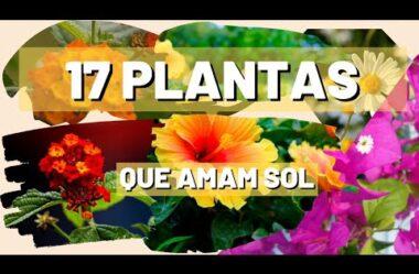 17 PLANTAS que AMAM SOL Para Você CULTIVAR no Seu JARDIM