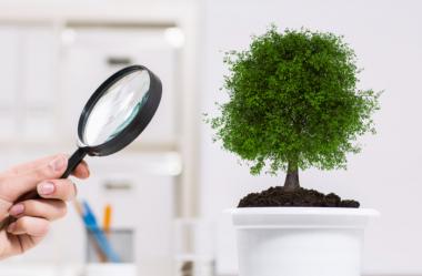 Como Identificar As 16 DOENÇAS DE PLANTAS De Casa