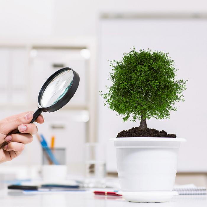 Como Identificar As 16 Doencas De Plantas De Casa - Como Identificar As 16 DOENÇAS DE PLANTAS De Casa