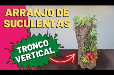 ARRANJO DE SUCULENTAS NO TRONCO VERTIVAL! PASSO A PASSO COMPLETO