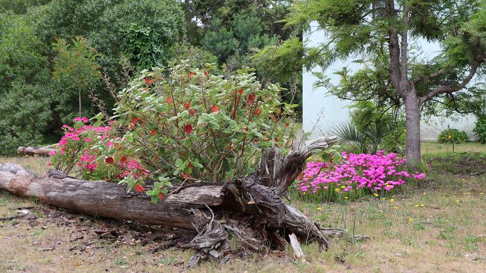 5 Coisas Que Nao Deveriam Faltar No Jardim 5 - 5 Coisas Que Não Devem Faltar Nos CUIDADOS COM JARDIM