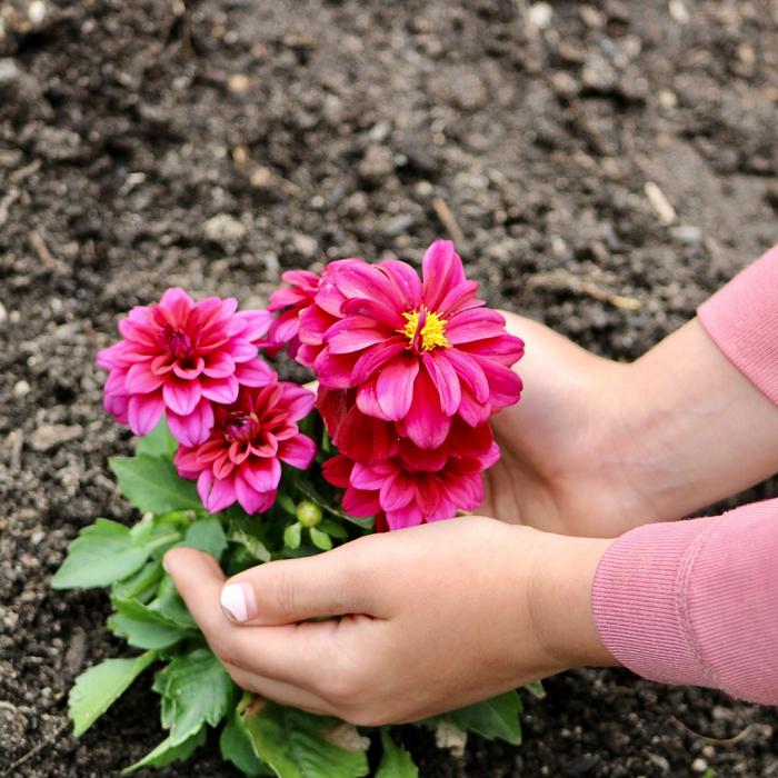 7 Dicas Para Tornar Seu Jardim Adequado Para Criancas 17 - 7 Dicas Para Jardim Adequado Para Crianças
