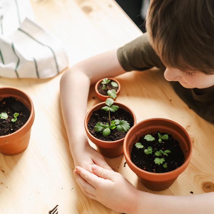 7 Dicas Para Tornar Seu Jardim Adequado Para Criancas 20 - 7 Dicas Para Jardim Adequado Para Crianças