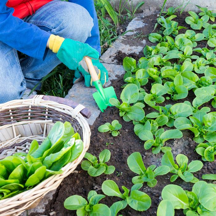 7 Dicas Para Tornar Seu Jardim Adequado Para Criancas 22 - 7 Dicas Para Jardim Adequado Para Crianças