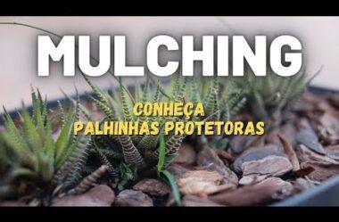 O que é MULCHING Conheça 7 Palhinhas Protetoras para suas Plantas