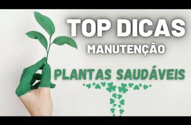 O que Todo Mundo deveria saber Para Manter suas PLANTAS SAUDÁVEIS! TOP DICAS!
