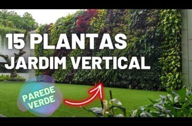15 PLANTAS Para Sua PAREDE VERDE – Faça seu Jardim Vertical!