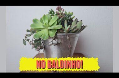 MINI JARDIM NO BALDINHO – UM ARRANJO DE SUCULENTAS FÁCIL E RÁPIDO