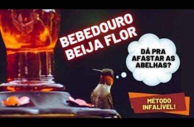 BEBEDOURO DE BEIJA FLOR – Como Afastar as Abelhas com um MÉTODO INFALÍVEL E TESTADO!
