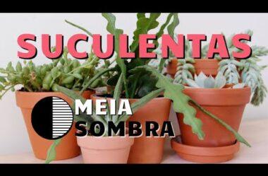SUCULENTAS DE MEIA SOMBRA PARA DENTRO DE CASA!